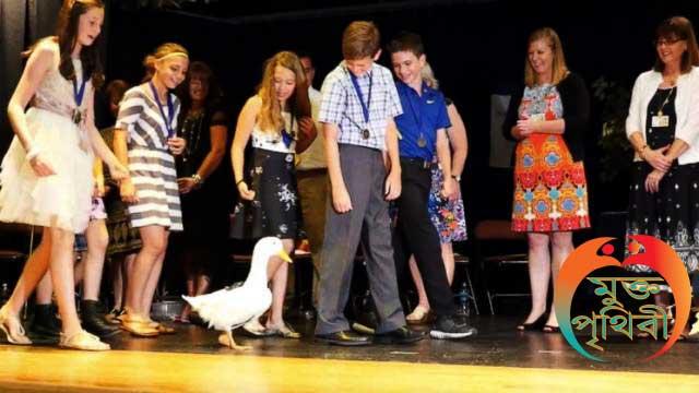 মানুষ নয় হাঁসের স্নাতক ডিগ্রি, Graduated Duck